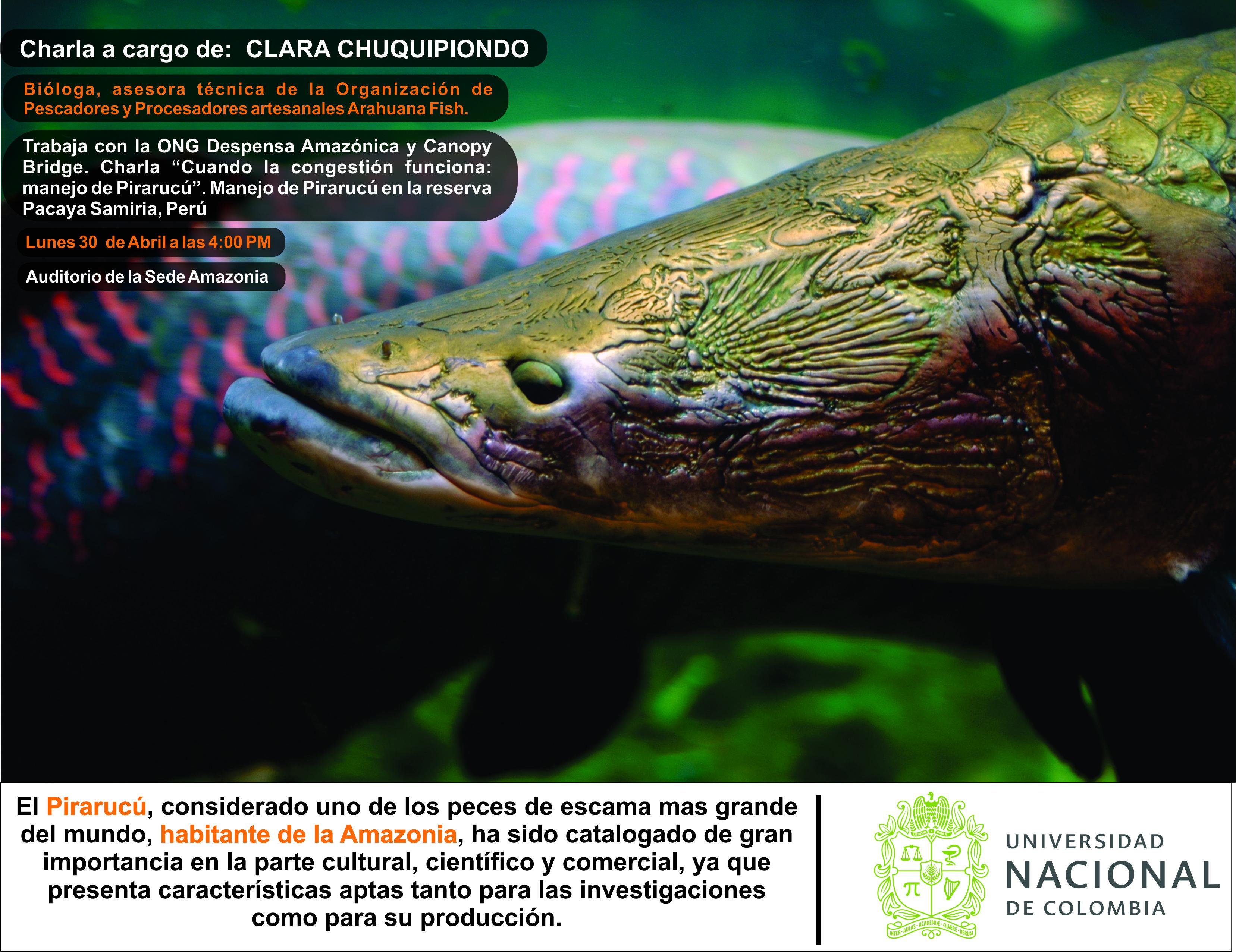 Charla «Cuando la congestión funciona: manejo de pirarucú». Manejo de pirarucú en la reserva Pacaya Samiria (Perú)