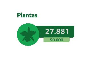 27881 Plantas