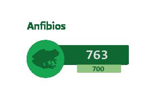 763 Anfibios