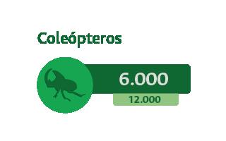 6000 Coleópteros